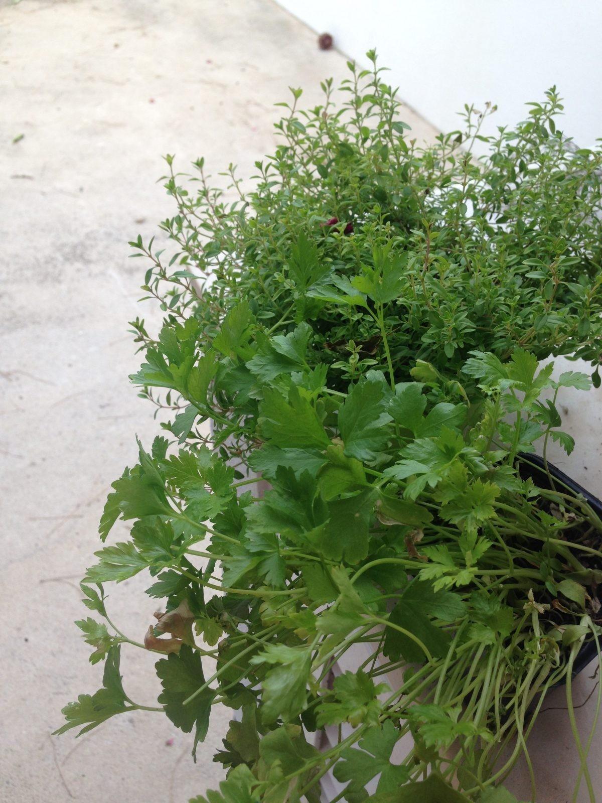 Plantas do terraço – Parte #1